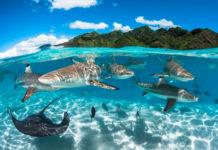 maravillas oceánicas