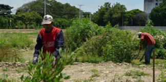 Alcaldía de Guacara realizó limpieza en áreas verdes
