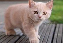 Revelan lo peligroso que son los gatos para el mundo