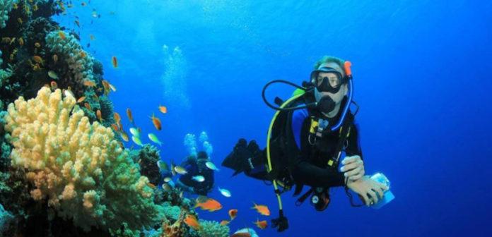 Científico venezolano Jonathan Vera, encontró una nueva especie marina
