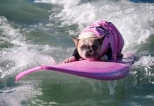 Surf City Dog