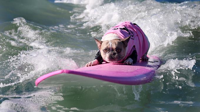 Surf City Dog
