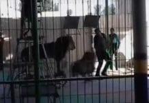Leon circo