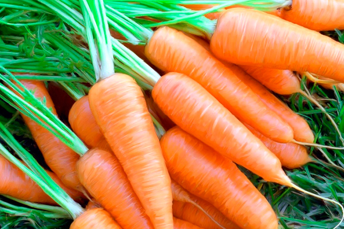 zanahorias6