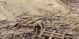 peruana sobrevive