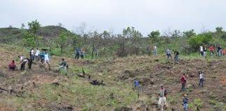Jornada Nacional de Reforestación