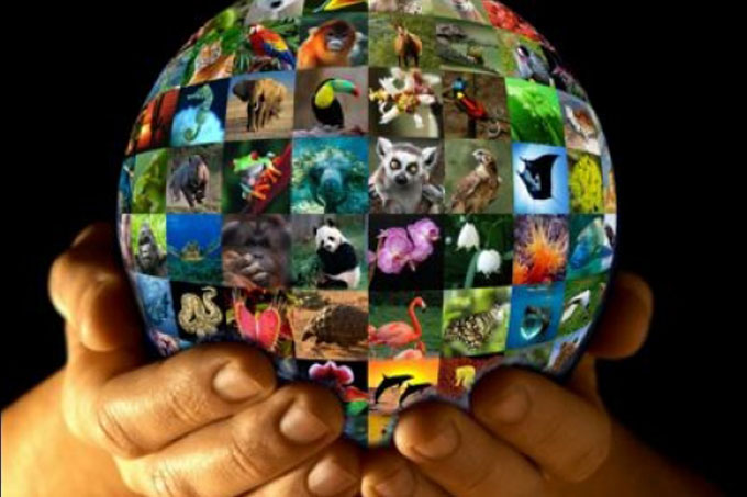 ¡Cuídalos! Hoy se celebra el Día Internacional de la Vida Silvestre