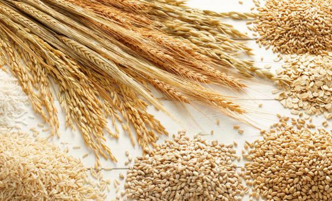 trigo ruso
