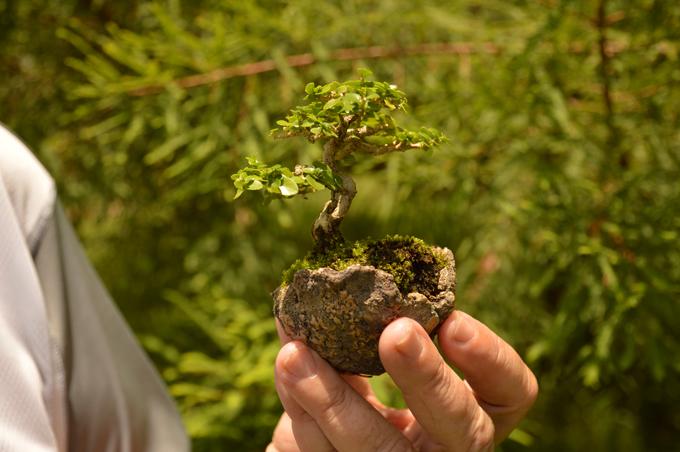 ¡Otro mundo! Artista de la naturaleza esconde 200 árboles tras su espalda