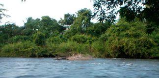Desaparecidas-Venezuela-Colombia-Río-Orinoco