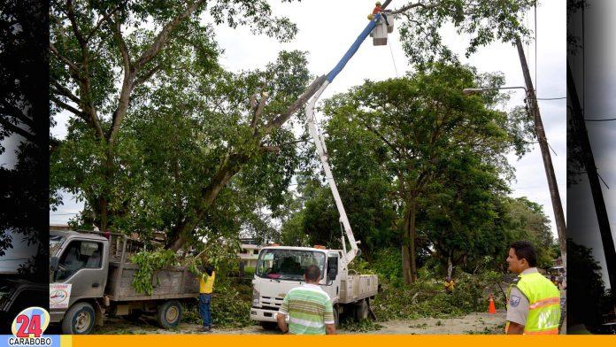 noticias24carabobo-Alcaldía-De-Naguanagua-poda--Árboles-en-beneficios-del-Servicio-Eléctrico---WEB-N24