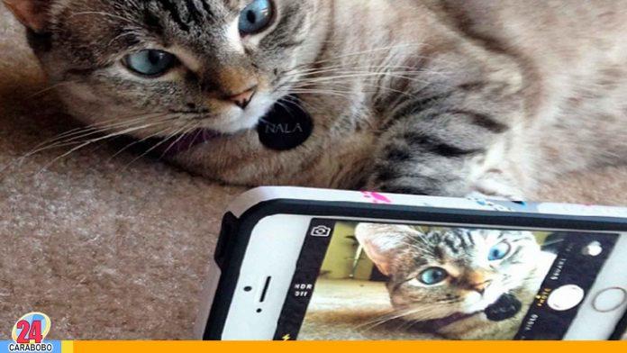 Noticias 24 Carabobo - Mascota famosa