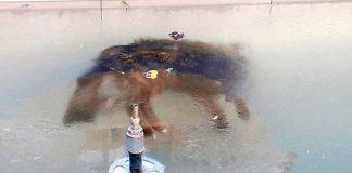 Noticias 24 Carabobo - perro congelado Bolivia cero