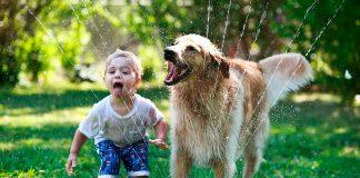 Noticias 24 Carabobo - Perro mata a bebé