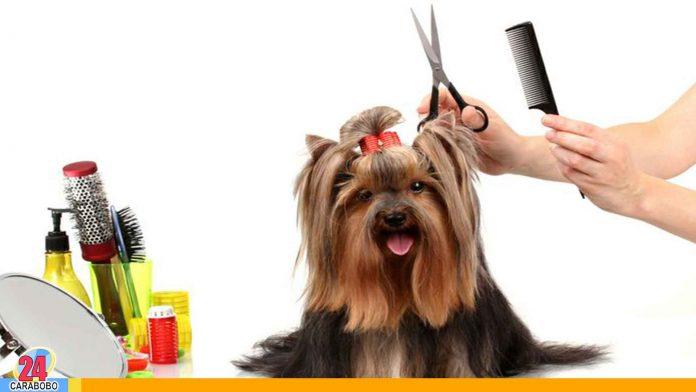 Noticias 24 Carabobo - Cortar pelo a tu perro