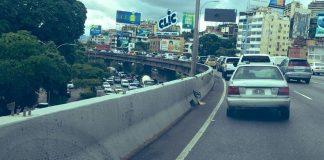 Autopista Francisco Fajardo