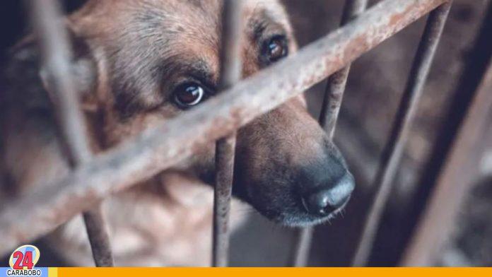 maltrato animal en EEUU