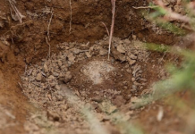 Hallan siete cuerpos en una fosa en Panamá
