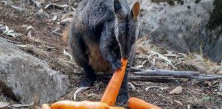 Animales de Australia - Animales de Australia