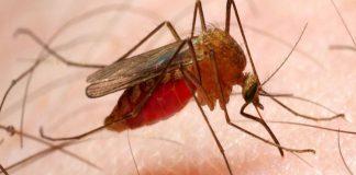 casos de malaria - casos de malaria