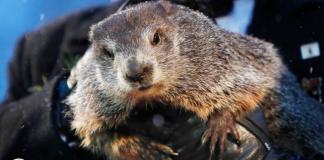 Marmota Phil predice la primavera podría llegar prontoa EE.UU.