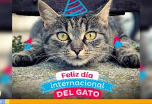 Día Internacional del Gato se celebra este 20 de febrero