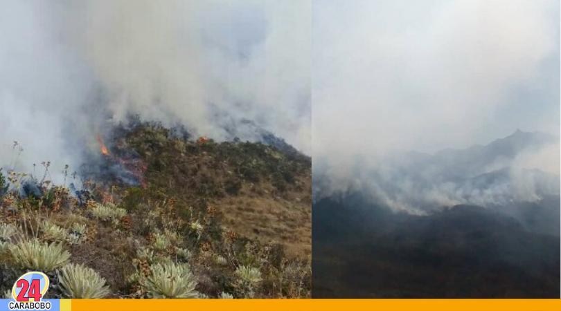 Incendios forestales en Mérida consume más de mil hectáreas