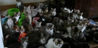 130 gatos en un apartamento de Moscú fueron encontrados