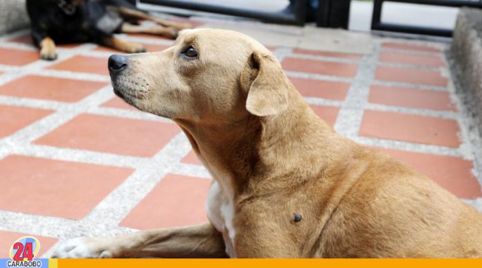 perros abandonados en Valencia - perros abandonados en Valencia