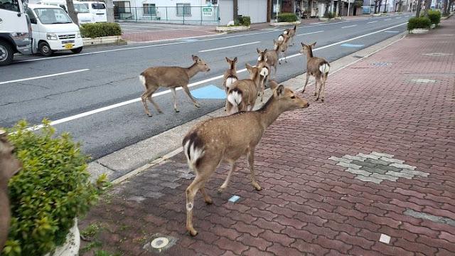 Animales salvajes - Animales salvajes