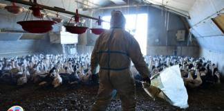 gripe aviar en Filipinas