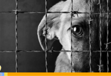 jóvenes maltratan a un perro en Guárico - Noticias24 Carabobo
