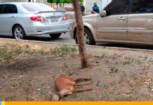 Asesinan a Venada-noticias24carabobo