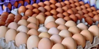 Precio del cartón de huevos - Precio del cartón de huevos