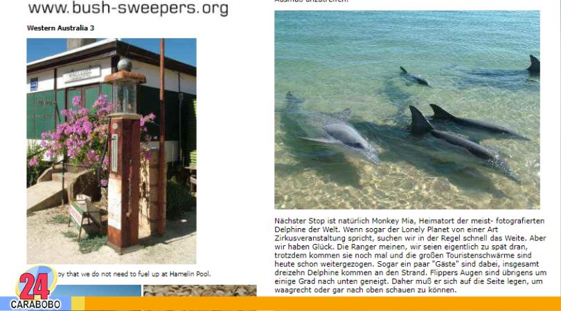 Delfines en Pampatar - Noticias 24 Carabobo