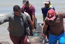 Playa Manzanillo - Playa Manzanillo