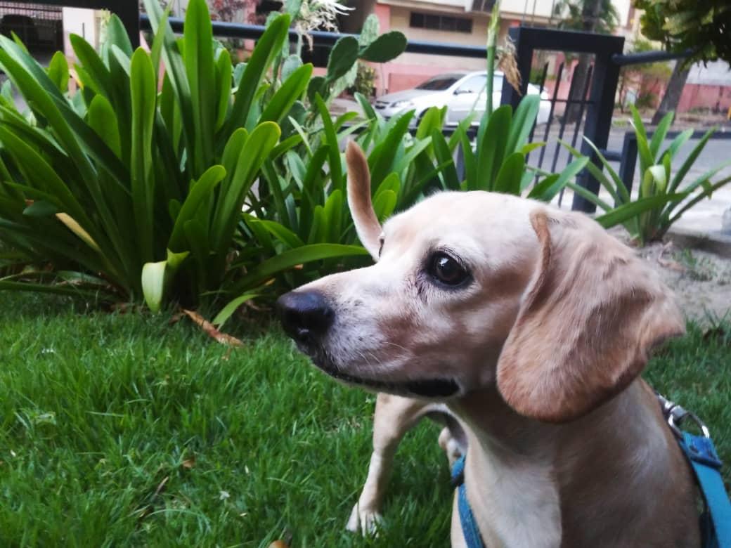La mirada de tu perro - La mirada de tu perro