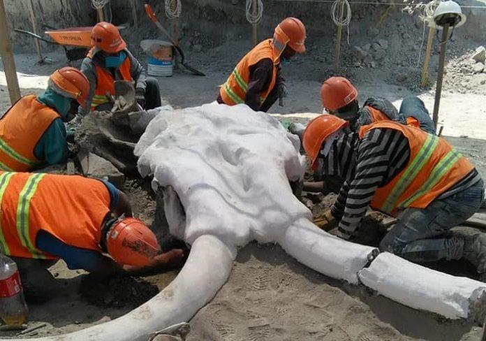 Mamuts en México - Mamuts en México