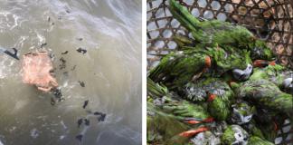 Aves ahogadas en Trinidad y Tobago