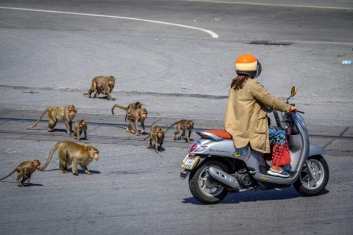Capital de los monos