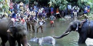 Muerte de una elefanta en India - noticias24 Carabobo