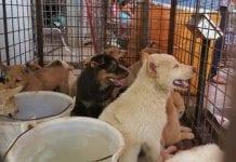 Festival de Yulin - Noticias24Carabobo
