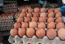 Huevos podridos en Caracas - Huevos podridos en Caracas