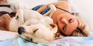 tu perro - Noticias24carabobo