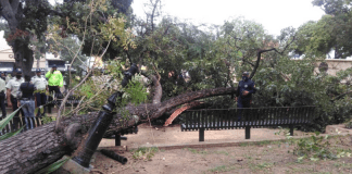 Caída de árboles en Valencia