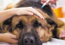 la eutanasia - Noticias24carabobo