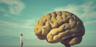 nuestro cerebro - Noticias24carabobo