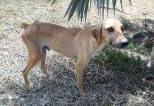 Perros callejeros en Valencia - Perros callejeros en Valencia