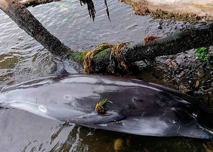 delfines muertos en Mauricio