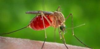 Virus del Nilo - Virus del Nilo
